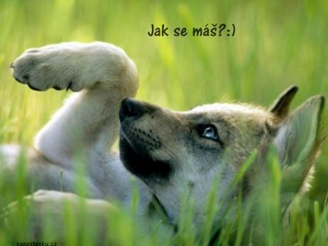 nanastenku.cz obrázek